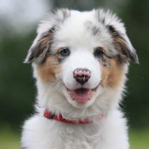 hondenschool HONDERWIJS - Workshops