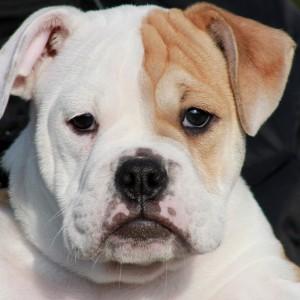 dog training school HONDERWIJS - English