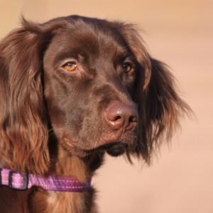 dog training school HONDERWIJS - bookcase