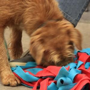 "Honderwijs - workshop ""puzzles for dog and handler - brain work"""