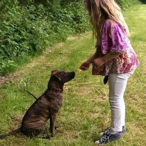 hondenschool HONDERWIJS - HondenIntro