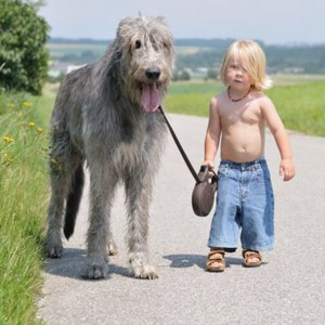 """hondenschool HONDERWIJS: lezing """"Kind-Hond, Veilig Opgroeien"""""""