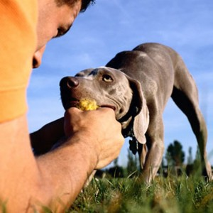 """hondenschool HONDERWIJS - lezing """"Mijn dominante hond moet leren luisteren!"""""""