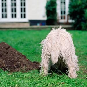 hondenschool HONDERWIJS - Gedragstherapie voor honden