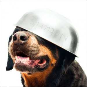 """hondenschool HONDERWIJS: lezing """"Hoe leren honden?"""""""