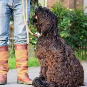 dog training school HONDERWIJS - Training classes