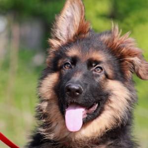 hondenschool HONDERWIJS - Prive les