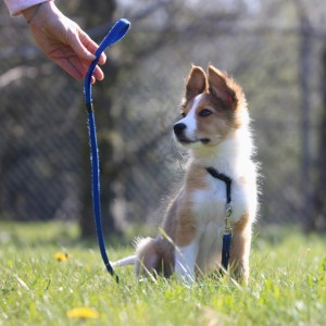 dog training school HONDERWIJS - Advice