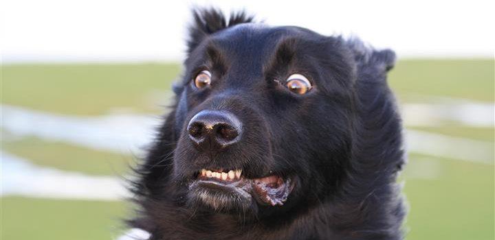 Uw hond schrikt! Steun geven mag best.