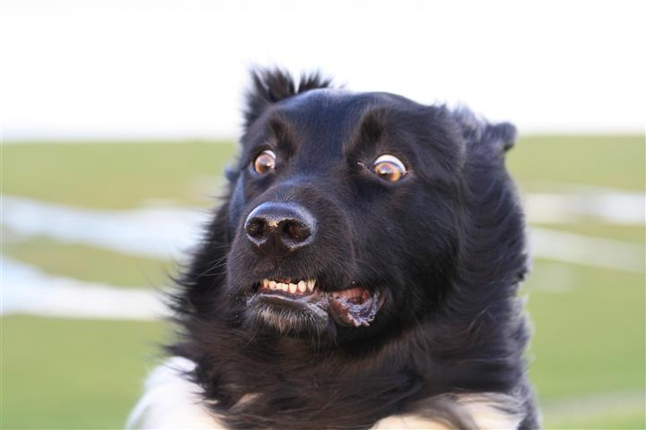 Lees meer over het artikel Uw hond schrikt! Steun geven mag best.